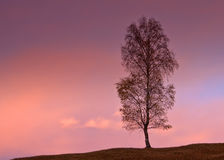 Single tree Royalty Free Stock Photography