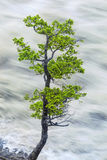 Single Tree By Motion Blurred River Water Royalty Free Stock Images
