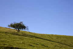 Single tree on mountain top Royalty Free Stock Photo