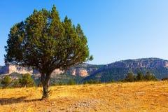 Single tree at mountainous terrain Royalty Free Stock Photo