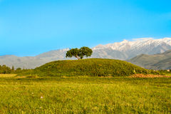 Single tree and mountains, sky in Kazakhstan, Almaty, road in Issyk Royalty Free Stock Image
