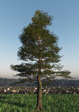 Single Tree On Natural Landscape Royalty Free Stock Photos