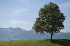 Single tree near by Oberstdorf Royalty Free Stock Photo