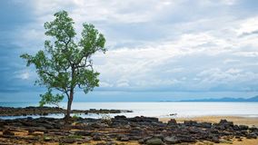Single tree near the sea Royalty Free Stock Image