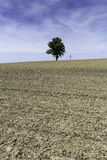 Single tree next to a cross Stock Images