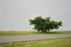 A single tree next to a tar road Royalty Free Stock Photos