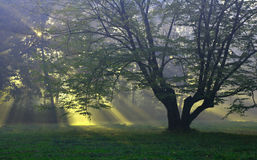 Single Tree On The Glade Stock Photo