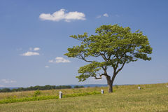 Single Tree in Open Field. One tree off center right in an open field of grass with blue sky and clouds Stock Image