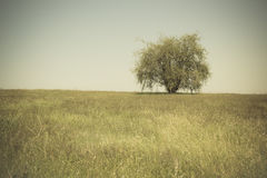 Single tree in an open grassy field meadow. Sepia tone royalty free stock photo