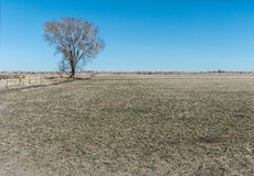 Single tree in pasture Stock Photography