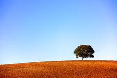 Single tree on a plowed hilltop Stock Photo