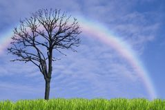 Single tree and rainbow. Single tree on blue sky background Stock Photos