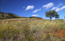 Single tree on red rock hill Stock Photos