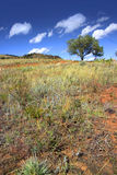 Single tree on a red rock hill Royalty Free Stock Photography