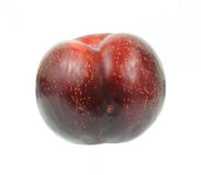 Single Tree Ripe Red Plum Stock Photo