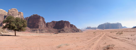 Single tree and road wadi rum Stock Photo