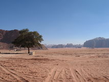 Single tree and road wadi rum Stock Photography