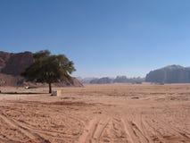 Single tree and road wadi rum Stock Photography