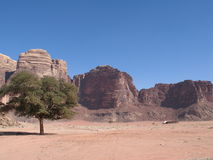 Single tree and road wadi rum Stock Images