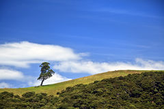 Single tree and rolling hill. Landscape of single tree and rolling hill with blue sky Royalty Free Stock Photo