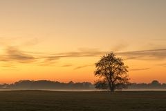 Single tree in rural landscape at sunset royalty free stock photo
