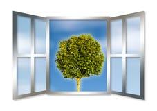 A single tree seen through an open window Stock Photo