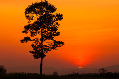 Single Tree Silhouette. Royalty Free Stock Photos
