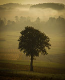 Single tree silhouette in morning fog. Vintage look Stock Images