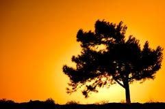 Single tree silhouette on sunrise Stock Photos