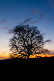 Single tree silhouette at sunset. A single tree in silhouette with bare branches against a red and orange sunset sky stock photography
