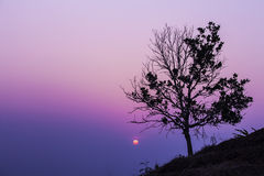SINGLE TREE SILHOUETTE AT SUNSET Stock Image