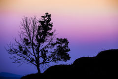 SINGLE TREE SILHOUETTE AT SUNSET Stock Photography