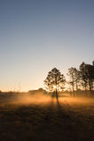 Single Tree Silhouetted Stock Photography