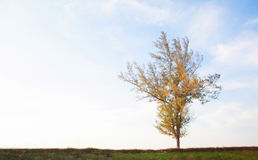 Single tree with sky Royalty Free Stock Images