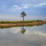 Single tree. A single tree with sky reflected on the river Royalty Free Stock Photos