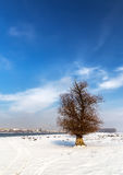 Single tree in snow near the Danube Royalty Free Stock Photo