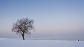 Single tree on a snowy field royalty free stock photo