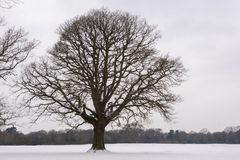 A single tree on a snowy field Southampton Common stock images