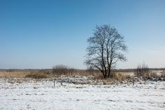 Single tree and snowy field. Winter view royalty free stock photo