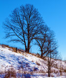 Single Tree at Snowy Slope Landscape Stock Photos