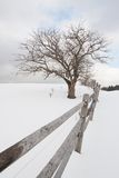 Single tree and a split rail fence in winter. Stock Photo