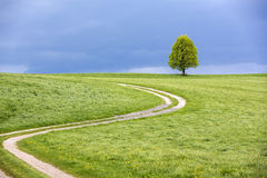 Single tree in spring with dramatic sky Royalty Free Stock Images