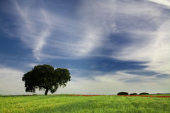 Single tree in a spring field Royalty Free Stock Photo