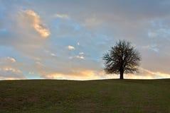 Single tree. Single spring tree on meadow in Slovakia Royalty Free Stock Image