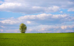 Single tree in spring meadow Stock Images