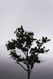 Single Tree Standing Alone Royalty Free Stock Photo