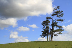 Single tree standing alone in a field Royalty Free Stock Photography