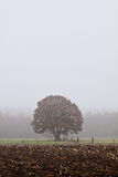 Single tree standing in the countryside Royalty Free Stock Photo