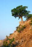 Single tree standing on the hill Stock Image