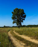 Single tree. Single standing summer tree along the road Royalty Free Stock Images